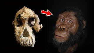 This is The Face of Our First Human Ancestor! *LUCY*