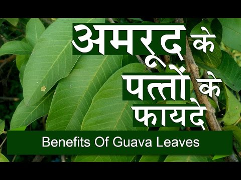 benefit of leaves The leaves of cinnamon trees, called cinnamomum verum or true cinnamon, contain phytonutrients that may provide nutritional benefits cinnamon powder is.