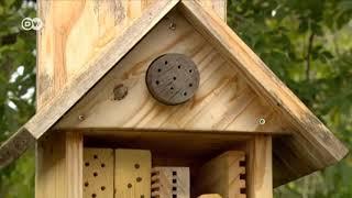 Jak zbudować hotelik dla owadów?