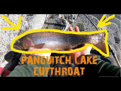 Panguitch Lake NICE CUTTHROAT Fall Utah Fishing | 2019