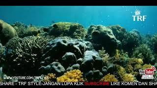 Download Video Mengenal Indahnya Taman Nasional Bunaken di Google Doodle Hari Ini MP3 3GP MP4