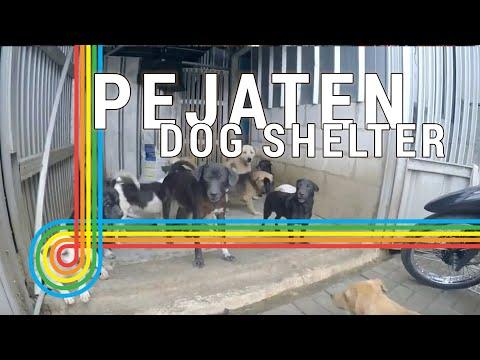 Pejaten Shelter | Dog Shelter