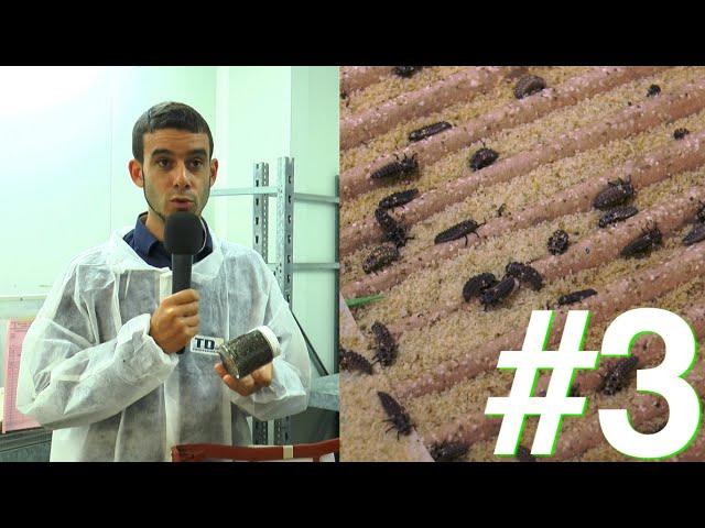 Eleveur... dans l'incroyable fabrique à insectes !