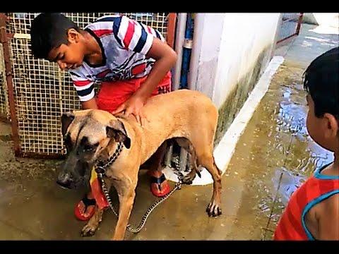 Dog Bath - Kids Bathing Their Great Dane