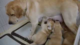 ベローナの子犬たちは生後46日目になりました。 丸々と健康に成長した子...