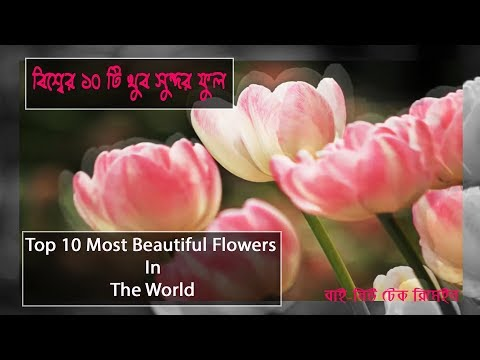 Top 10 Most Beautiful Flowers In The World by new tech remain