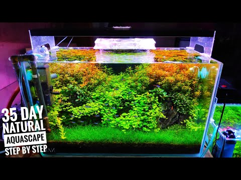 #146-membuat-aquascape-tema-natural