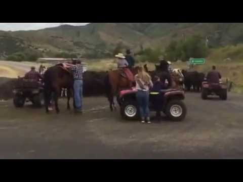 Morgan County Family's Cattle Run Up 1-84