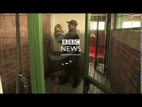 بي_بي_سي_ترندينغ  |#بالفيديو: كيف تدرب الشرطة في #التشيلي الكلاب لمكافحة الجريمة؟  - نشر قبل 2 ساعة