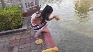 Kate is feeding turtles & fish @Rachavinit School