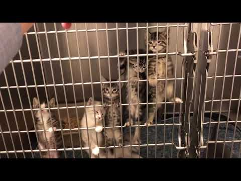Meowing Kittens at the Mission Valley Animal Shelter