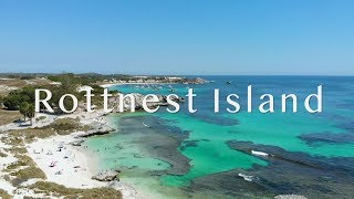 A Perfect Trip To Rottnest Island In Australia