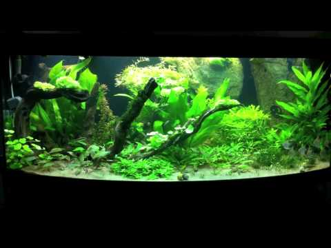 Planted high tech aquarium juwel vision 450 youtube - Aquarium einrichtungsideen ...