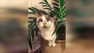 Видео про кошек 2019 Новые приколы с котами май, смешные кошки и смешные коты с собаками 2019 #69