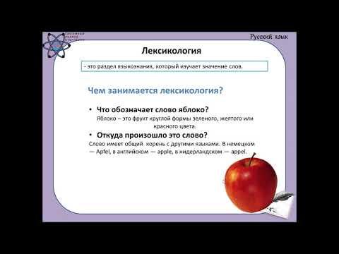 Урок об уровнях языка и разделах языкознания понятным для детей языком