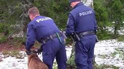 Joulupukki hukassa! Itä-Uudenmaan poliisin koirapartion jouluinen etsintätehtävä