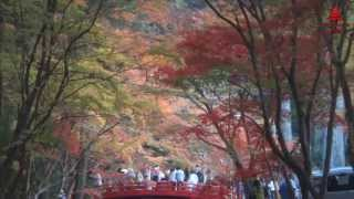 Autumn Leaves - Japan