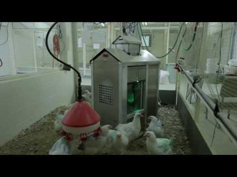 Precision Broiler Breeder Feeding System