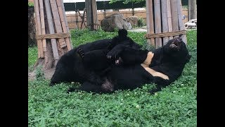 After bile farm horror, blind bears find solace in each other