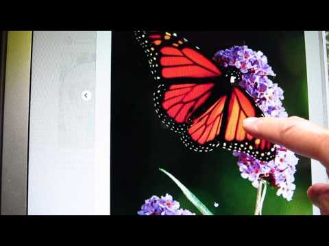 Night time story - Monarch butterfly