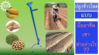 เปรียบการปลูกข้าวโพดหวาน แบบเก่า กับ การใช้ เครื่องหยอดข้าวโพด   ป้อมซังเกษตรสร้างชีวิต (EP.10)