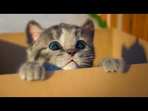 МОЙ Маленький КОТЕНОК СИМУЛЯТОР котика как мультик видео для детей виртуальный питомец #ПУРУМЧАТА - Ржачные видео приколы