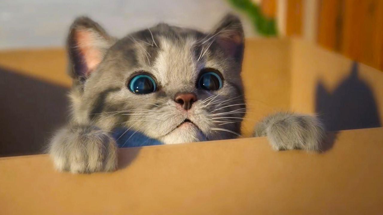 МОЙ Маленький КОТЕНОК / СИМУЛЯТОР котика как мультик для ...