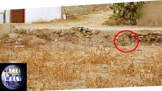 Findest du diese 4 versteckten Katzen ?