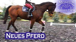 NEUES Berittpferd | Wie motiviere ich mein Pferd? | 6j Wallach