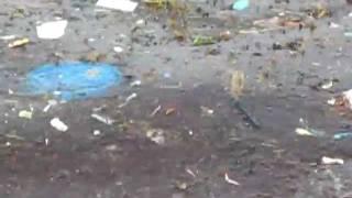 Plastic Garbage Slick Off Belize Coast