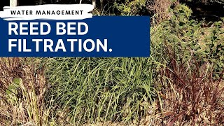 Water Management | Filtering Water with Reed Beds