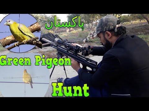 Green Pigeon (Hariyal) Hunting In Pakistan With PCP Airgun 2019-2020