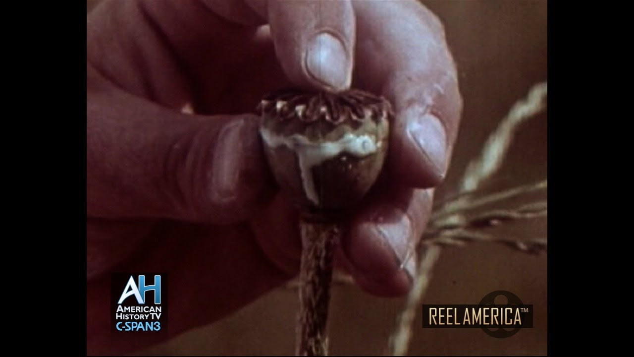 REEL AMERICA PREVIEW: History of Heroin - 1972
