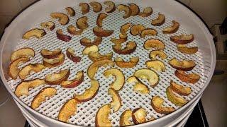 Заготовка яблок на зиму. Сушка яблок в сушилке