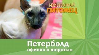 Петерболд. Что мы знаем об этих кошках