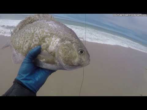 MONSTER SURFPERCH! Monterey Bay Surf (Fly) Fishing [All Caught & Released]