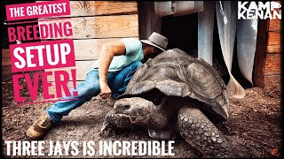This Guy's Giant Tortoise Sanctuary is Incredible!