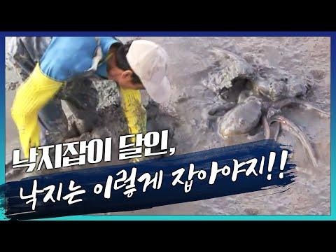 낙지잡이달인 강대용의 지속가능한 어업 [어�
