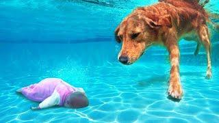 حيوانات أنقذت حياة أصحابها بطرق لا تصدق