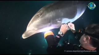 Download Bottlenose Dolphin Rescue Mp3 and Videos