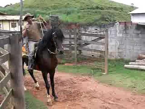Monty roberts encantador de cavalos