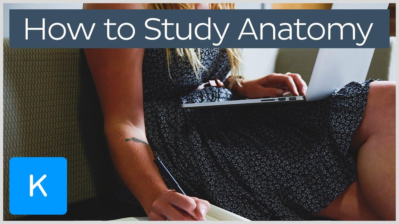 How To Study For Human Anatomy Kenhub Youtube