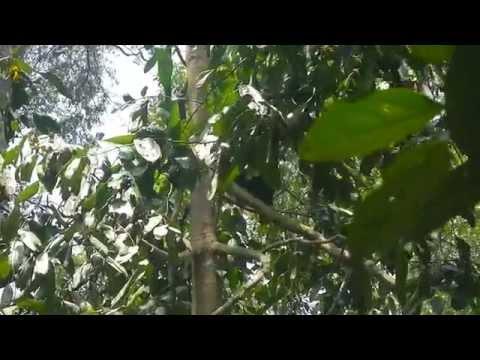 BSBCC Sepilok Malaysia Borneo