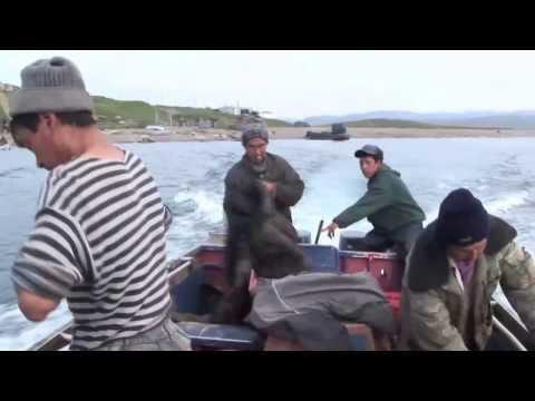 Промысел кита. (Охота на кита №1)