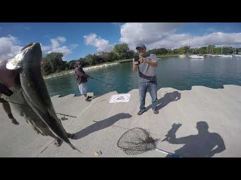 Salmon Fishing Chicago 9/17/2016 Montrose Harbor