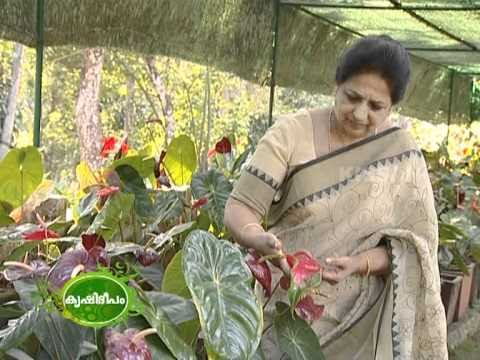 papaya cultivation guide in hindi
