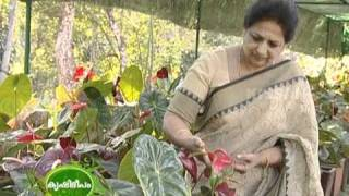 Success story of a farmer with multi enterprise farming - Ornamentals,fruits,poultry,and spices