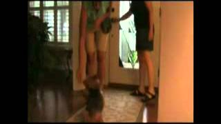 Dogs Jump At The Door - Positive Dog & Puppy Training In Jacksonville, Fl