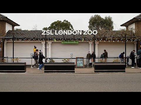 شاهد: حديقة حيوانات لندنية تعيد فتح أبوابها للزوار  - نشر قبل 46 دقيقة