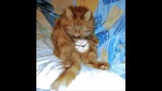 Кошка, которая гуляет сама по себе